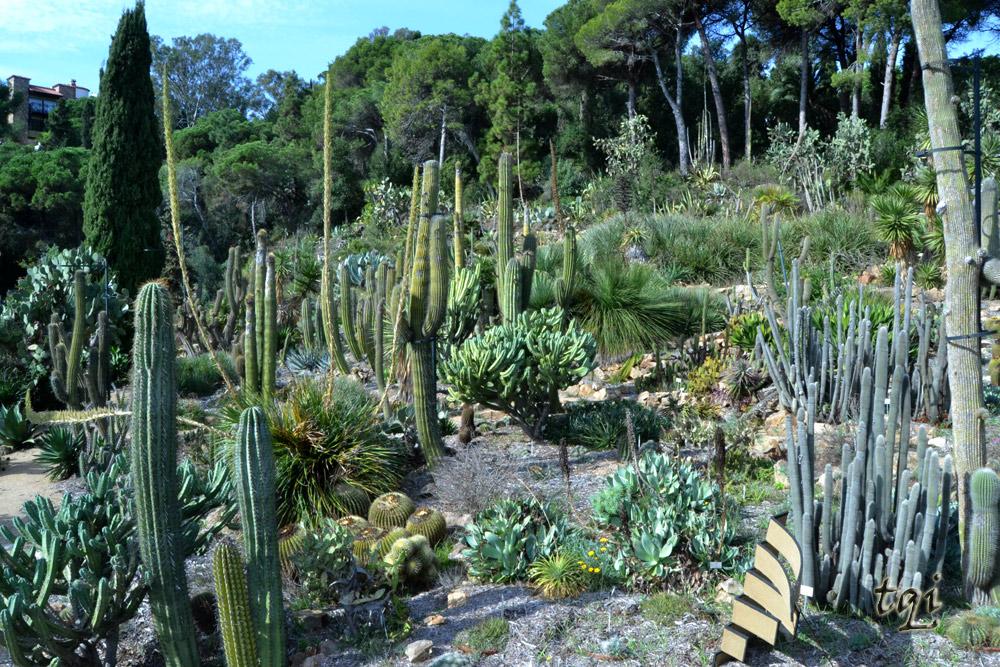 Jard n bot nico de blanes marimurtra tienes que ir for Botanic com jardin